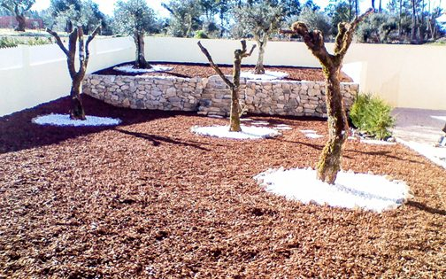 Low maintenance Olive Grove in Central Portugal